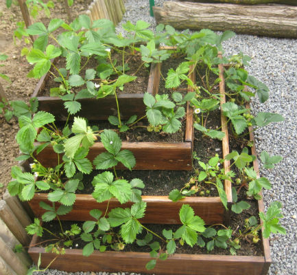 2006 2013 bricolage annie site - Planter des fraises en jardiniere ...